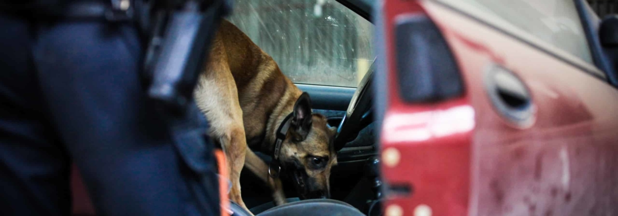Arizona Police use dog to search vehicle