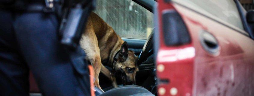 Arizona Police use dog to search vehicle